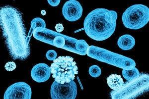 人竟有90%是細菌 怎樣相處才能瘦身抗病?