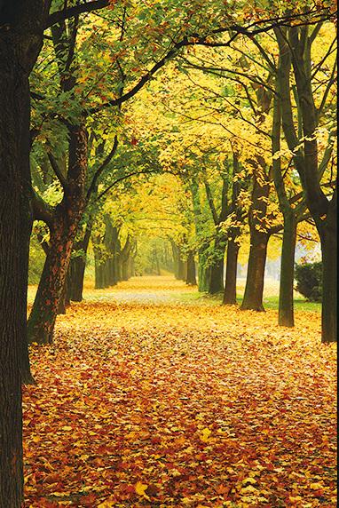 秋季捷克公園變成浪漫的金色。