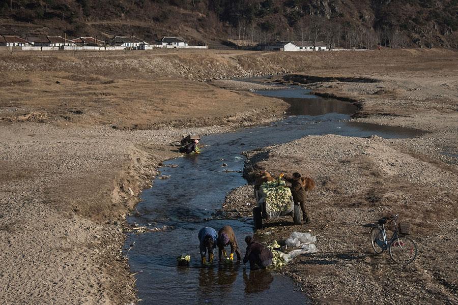 2017年11月21日,北韓東岸地區的居民在河中洗甘藍菜。(ED JONES/AFP/Getty Images)