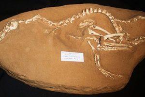 發現四不像恐龍物種 超出科學家想像