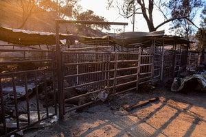 南加州大火肆虐 近70匹純種馬葬身火海