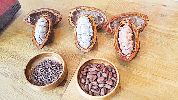 可可的果實(上),可可豆(下右)及經烘焙後的可可豆(下左)。(莫森/大紀元)