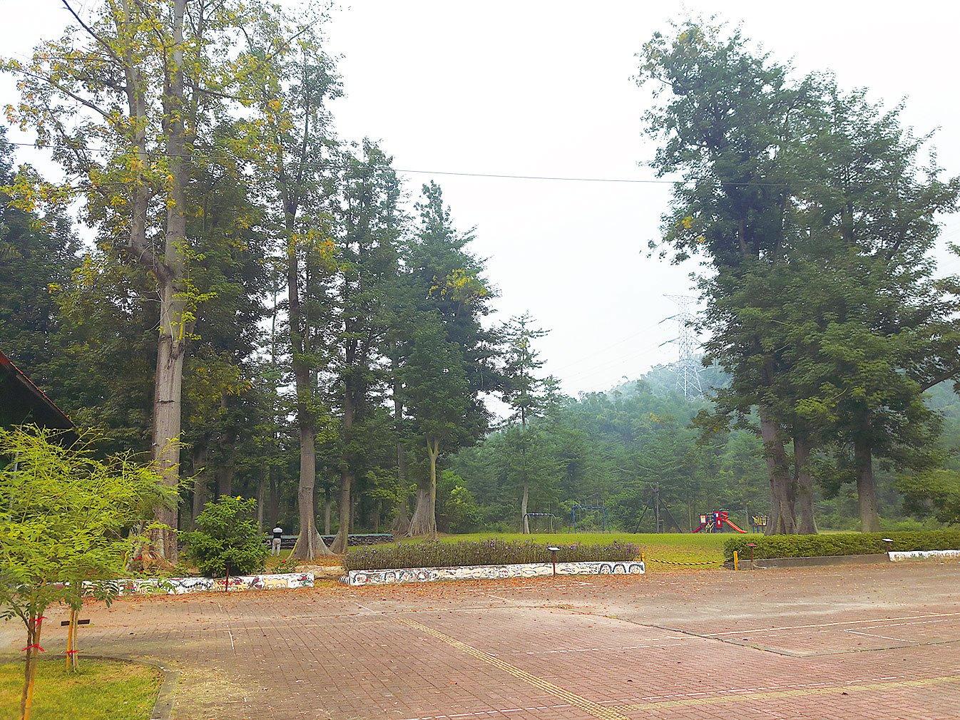 部落的木棉林高聳參天,四季皆有不同景致。(楊秋蓮/大紀元)