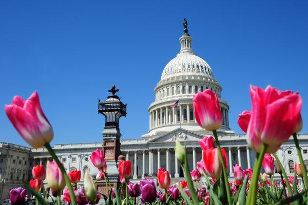 美國參議院12月20日晚挑燈夜戰,以51票對48票通過了全面改革美國稅務系統的議案。圖為華盛頓美國國會大廈。(法新社)