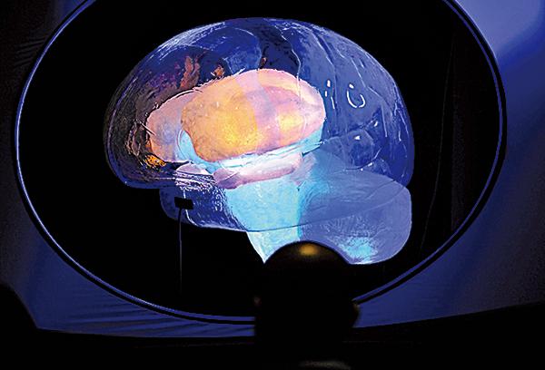 2010年11月16日,美國自然歷史博物館裏舉辦的大腦展覽。(法新社)