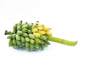 香蕉顏色決定功效 青皮蕉助減肥