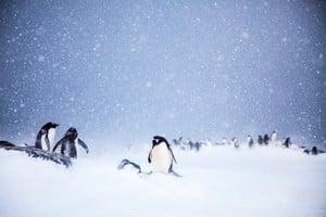 科學家首次直觀極地冰雪中的活細菌
