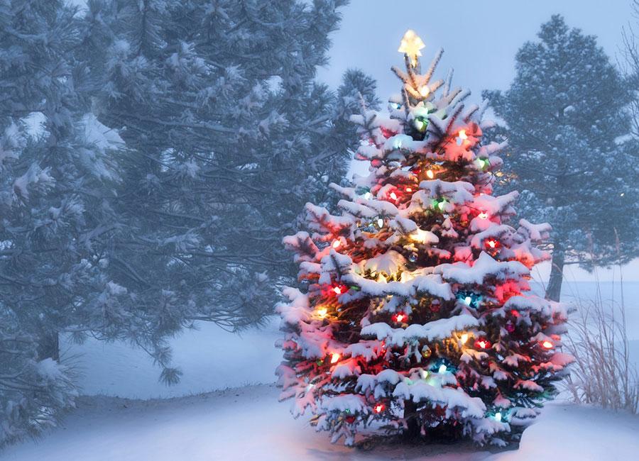 中共禁止以任何形式過聖誕節的官方文件不斷流出,有的地方甚至推倒聖誕樹,大陸民眾對此十分反感。圖為聖誕樹。(Fotolia)