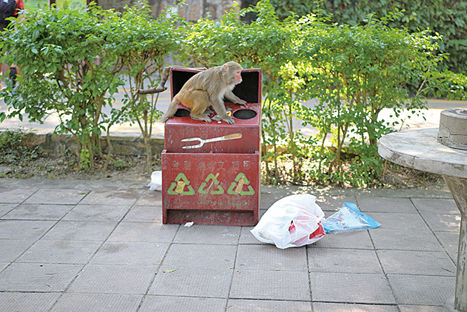 郊野公園燒烤場內的垃圾箱,常常被野生獼猴光顧,垃圾箱旁滿地垃圾。