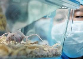 基因療法成功預防小鼠阿爾茲海默氏症
