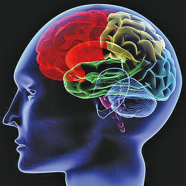 Nature研究發現免疫炎症反應加劇阿茲海默症病情(Fotolia)