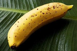 日本農場推出皮可吃的香蕉 每週限量10條