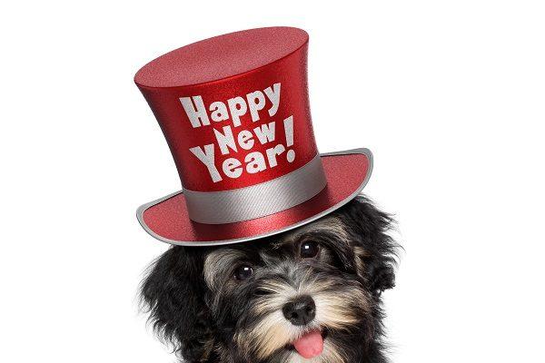 趣味英語:除了Happy New Year你還可以說…
