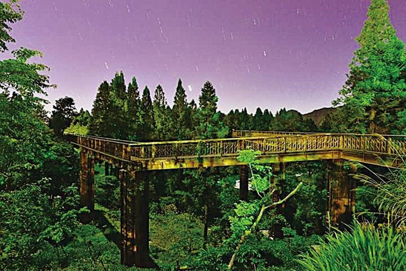 沼平公園櫻之道夜景。(嘉義義林區管理處)