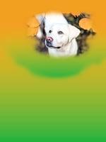 狗狗在家突然不安 媽媽致電學校救女一命