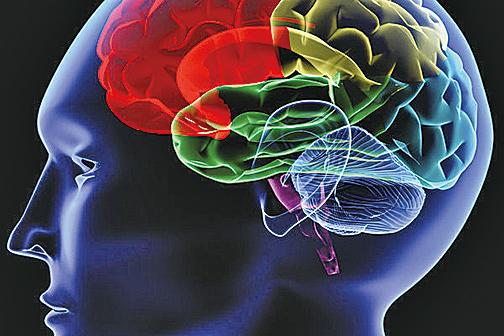 研究發現腸道菌群不僅控制著人體消化系統,新陳代謝和體重,甚至也「遙控指揮」人的大腦,對大腦活動和情緒產生影響。