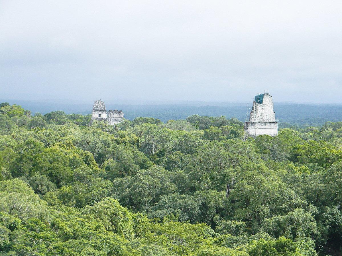 叢林中的危地馬拉蒂卡爾金字塔群。(維基百科