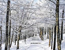 大雪美景 極品泰山