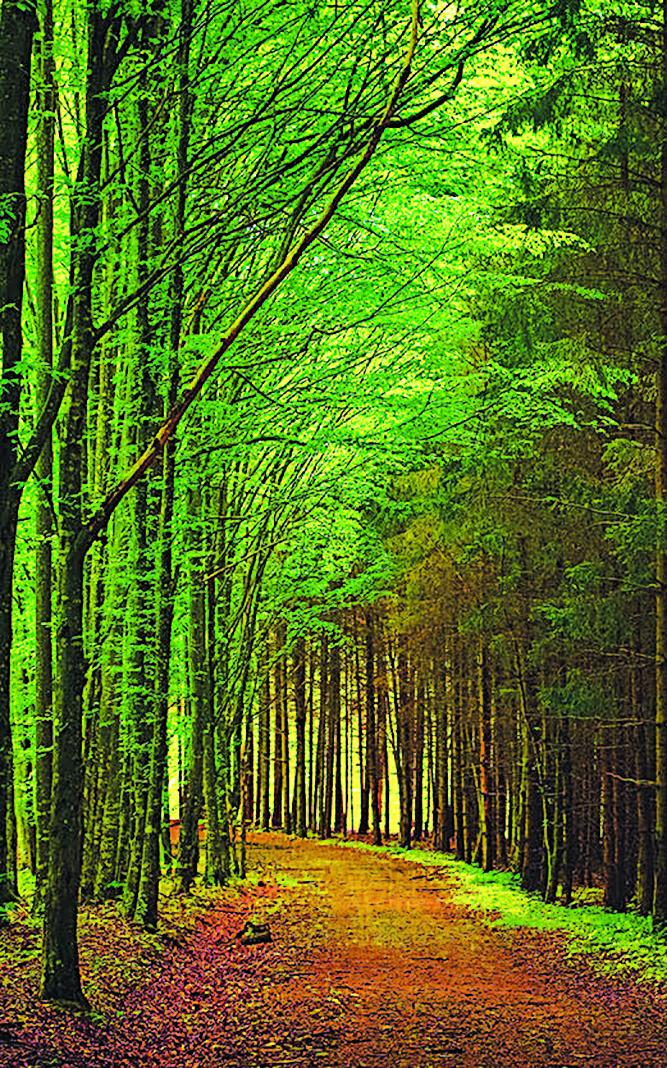 荊棘林中路