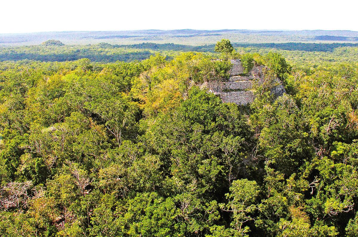 叢林中巨大的旦達金字塔。(維基百科)