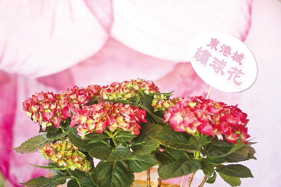 繡球花。(余鋼/大紀元)