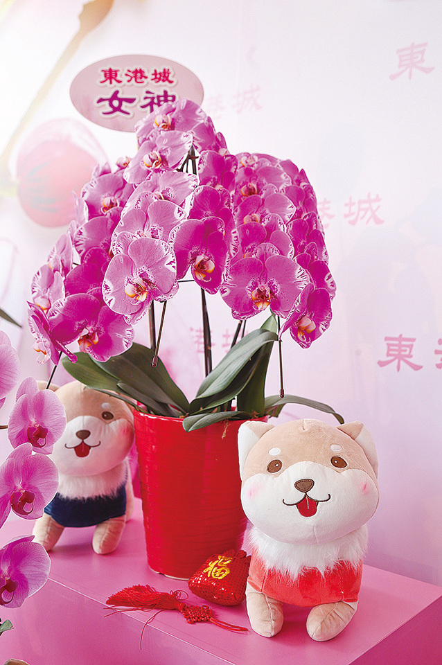 楊尹俊在港培植出的日本皇室系列蘭花「女神」。(余鋼/大紀元)。
