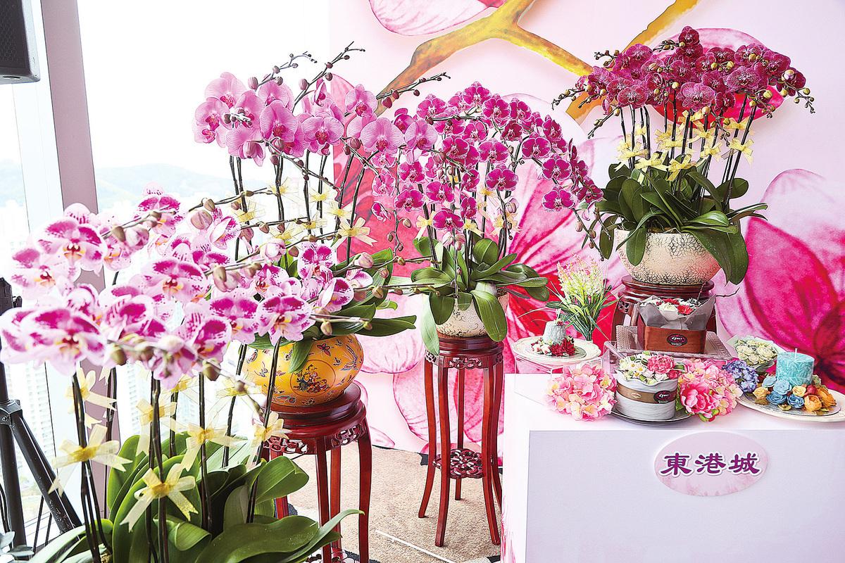 東港城年花展活動期間可以欣賞到好多新品種蘭花。(余鋼/大紀元)