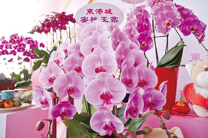 楊尹俊在港培植出的日本皇室系列蘭花「蜜桃玉露」。(余鋼/大紀元)