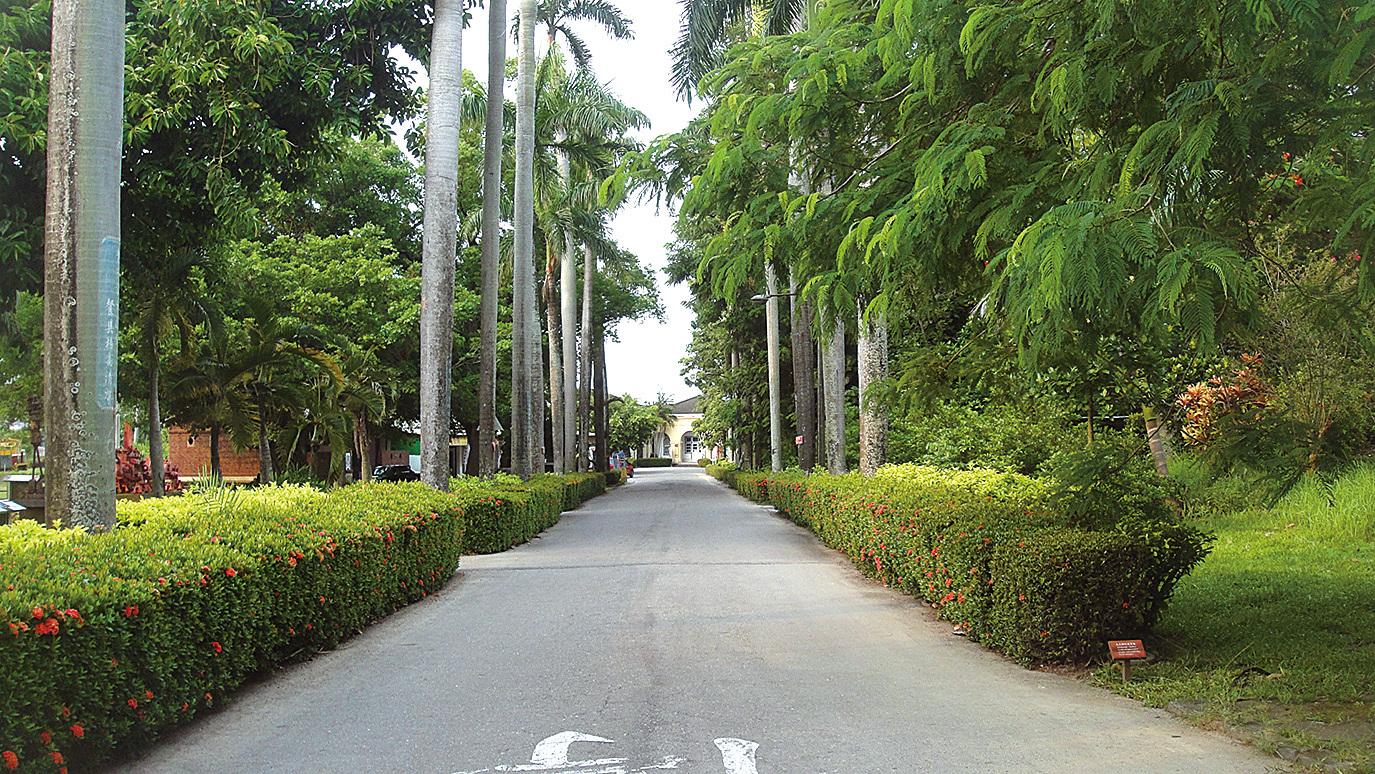 糖業博物館入口處有兩排筆直的椰林大道,路的盡頭是昔日仿巴洛克式的俱樂部。(楊秋蓮/大紀元)