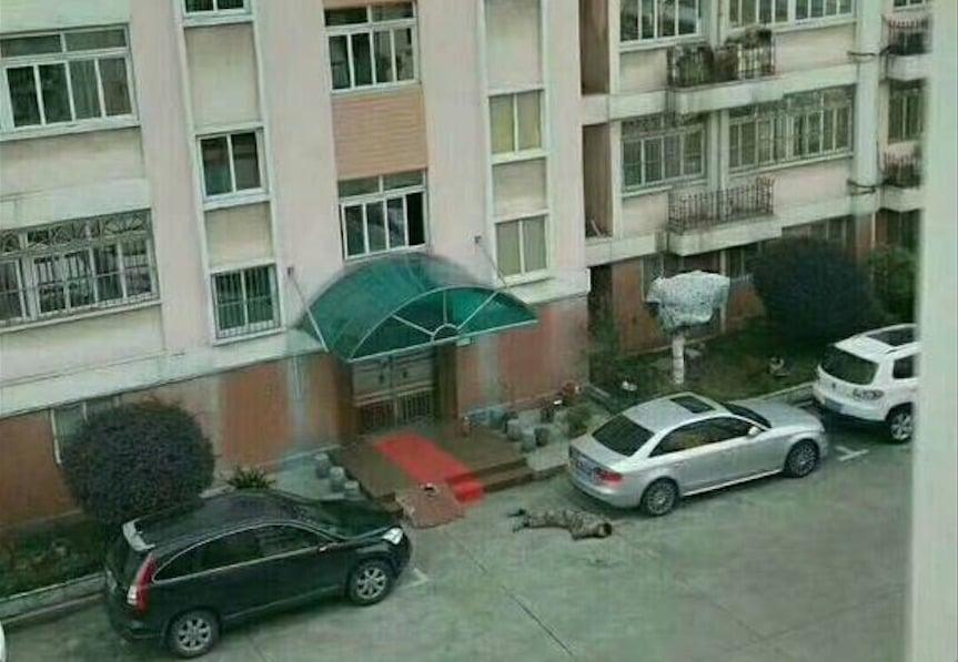 傳東部戰區某部團政委張寧生從自家八樓跳樓身亡。(網頁擷圖)