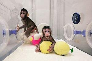 【新聞看點】細思極恐!複製猴中國誕生背後