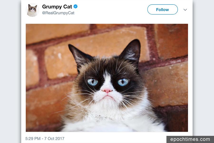 因表情暴躁、充滿不滿而走紅的美國「不爽貓」在肖像權訴訟中獲賠71萬美元。(推特擷圖)
