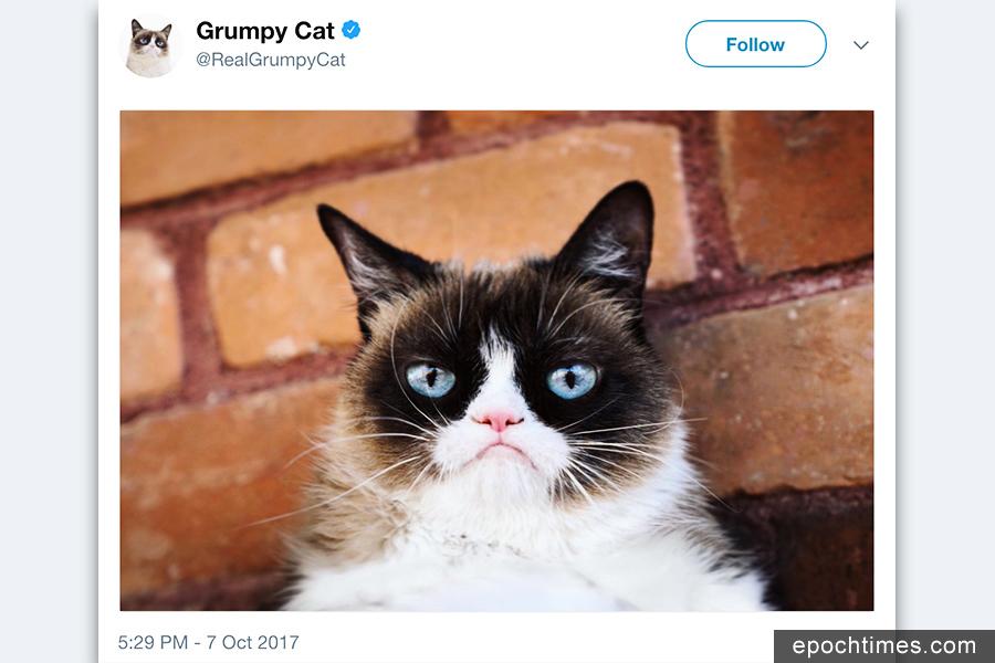 美國「不爽貓」版權受侵 貓主獲賠71萬美元