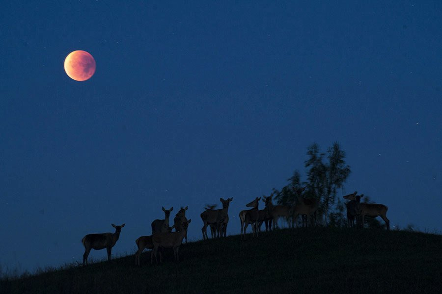 猶太智者:「超級藍血月」對阿拉伯國家不祥