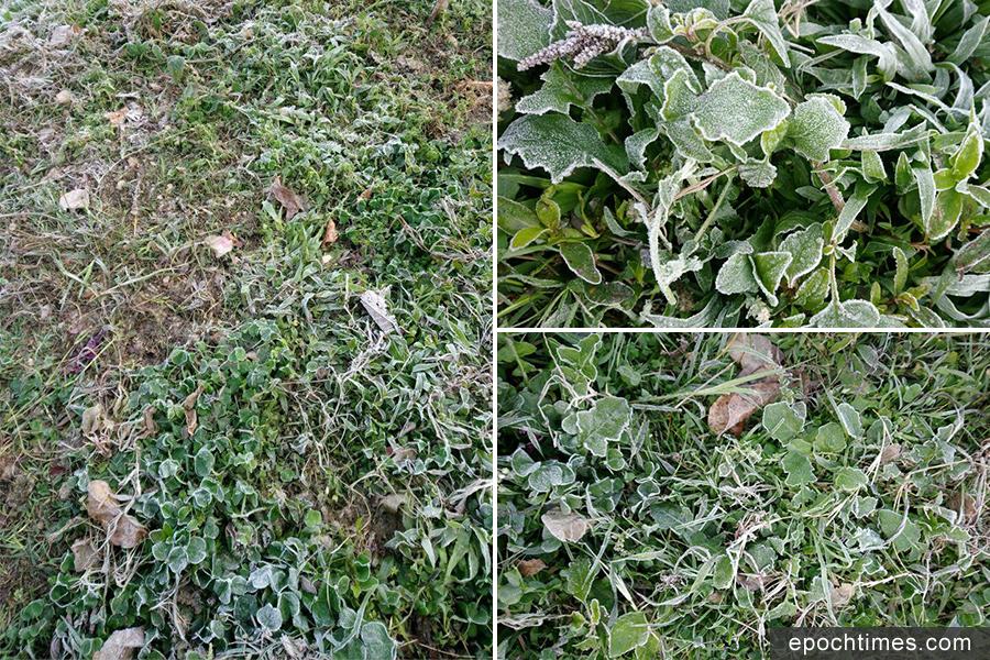 上午八時許,粉嶺九龍坑草地出現地面霜。(讀者提供)