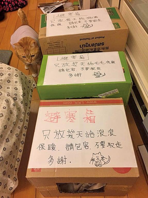 熱心市民為流浪貓製作的避寒箱。(天下貓貓一樣貓Facebook群組)