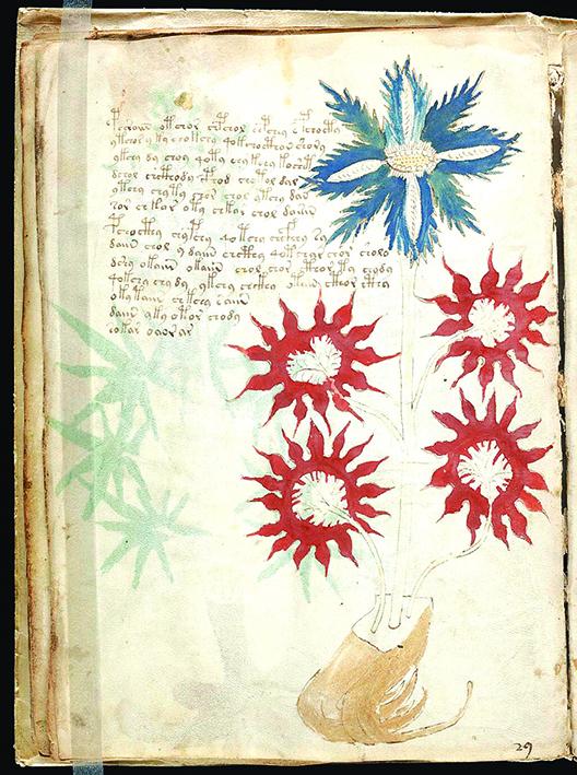 伏尼契手稿以不明文字手寫而成,共有240 頁,其內容不明、作者不詳。圖為該書第32 頁。(維基百科)