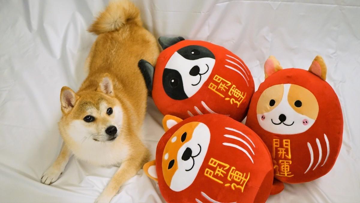 以日本達摩公仔為概念設計的「咕嚕狗」,有柴犬、哥基及波士頓㹴三款。