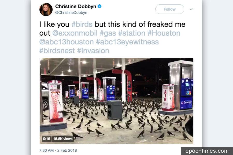 鳥群佔領美國德州一加油站 場面如恐怖片