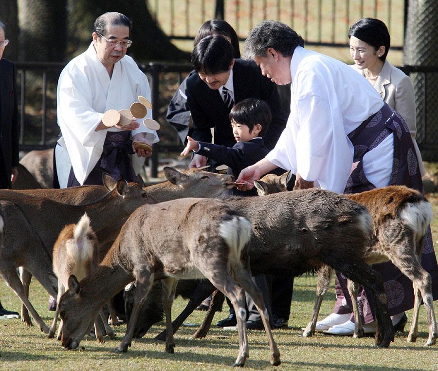 日本奈良公園的野生鹿攻擊遊客事件今年大幅增加。圖為2012年11月8日,日本悠仁親王(圖中男童)在奈良公園餵鹿。(JIJI PRESS/AFP/Getty Images)