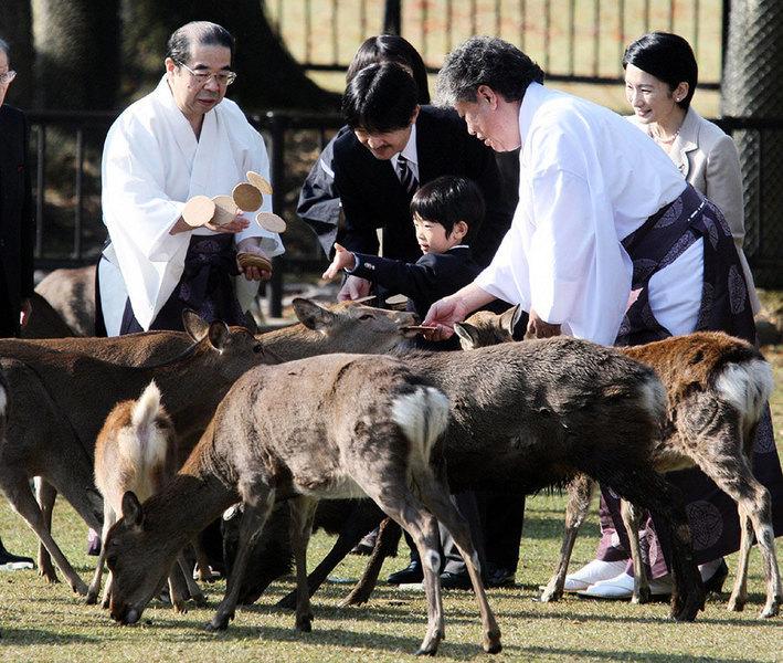 日本奈良鹿攻擊遊客事件暴增 中國人佔八成