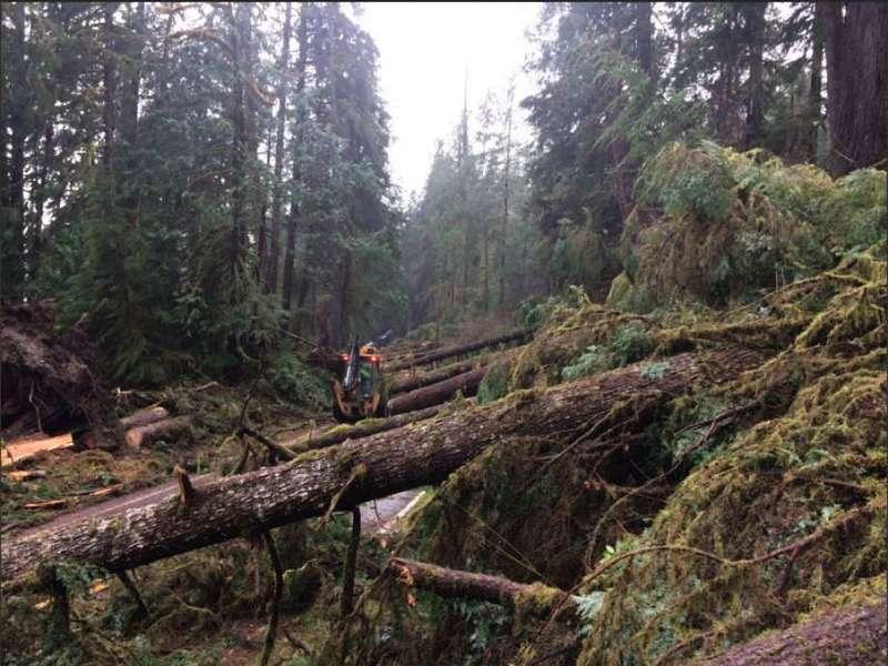 怪風吹倒美國國家公園上百棵樹 令專家費解