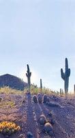 看盡仙人掌 ——美國索諾蘭沙漠植物園
