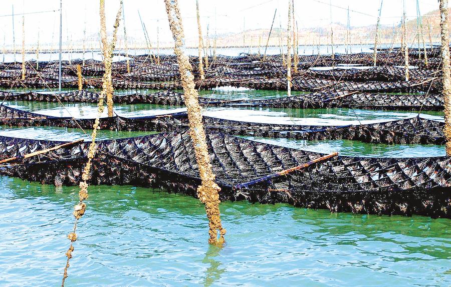 新安郡海苔 葉肉厚   口感好   營養豐 南韓美食家首選