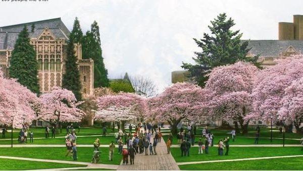美國大學裏有150多個中國學聯會,每學期可從中共大使館申領活動經費。圖為華盛頓大學。(University of Washington)