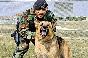 英特種部隊遇伏擊  美軍犬咬退IS勇救英兵
