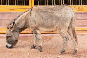 中共兩部門因「驢」互掐 背後涉千億阿膠市場