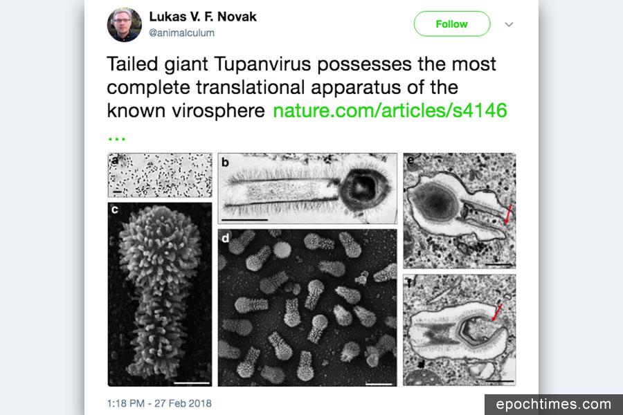 巴西驚現新型超級巨大病毒 挑戰教科書定義
