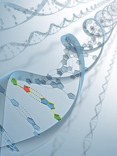 分子生物學的DNA分析證實,進化論這種假設是個錯誤。(Fotolia)