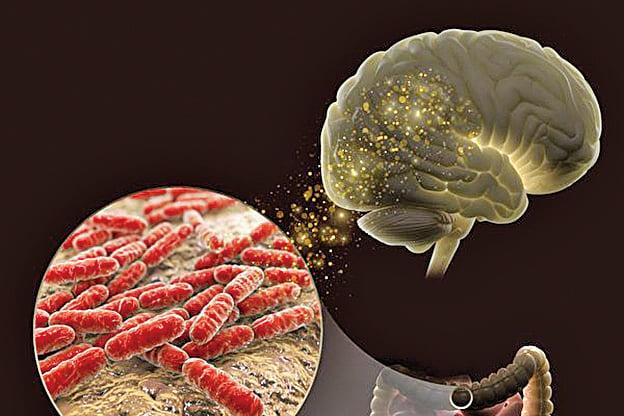 乳酸菌可能會提升記憶力。(PNNL)